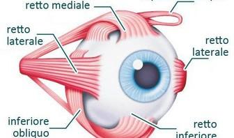 Geni della miopia?